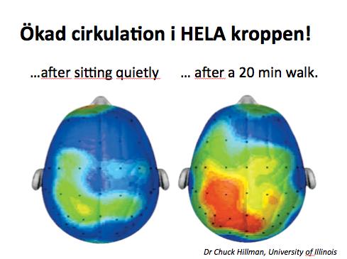 Motion-hjärnan-cirkulation